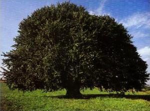 Baum2
